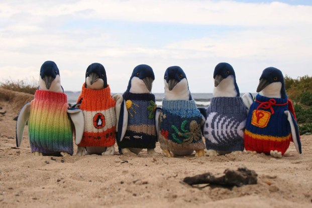 oldest-man-australia-knits-penguin-sweaters-1