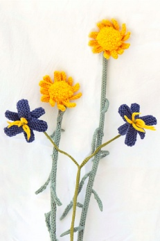 daisies-flax_medium2